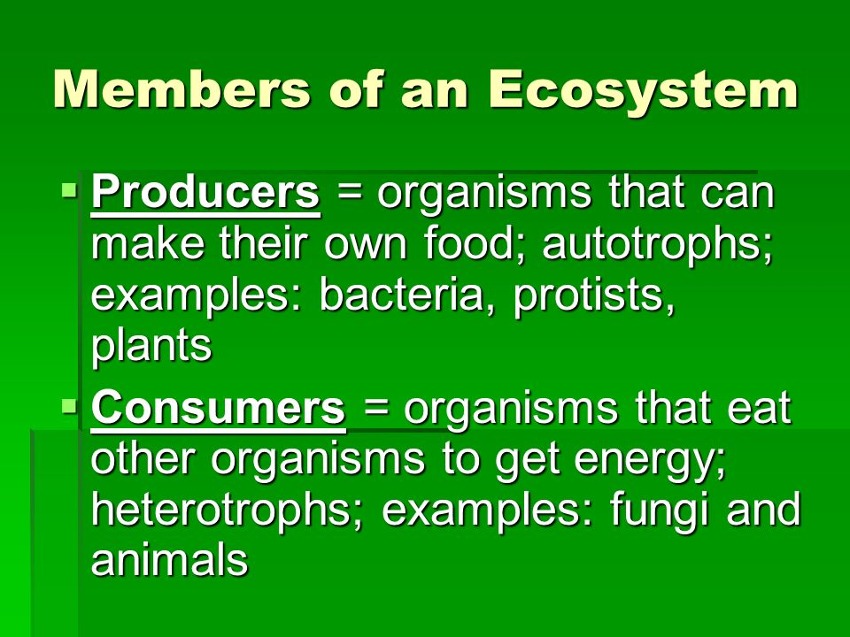 Ecology Georgia High School Graduation Test Science Review Ppt