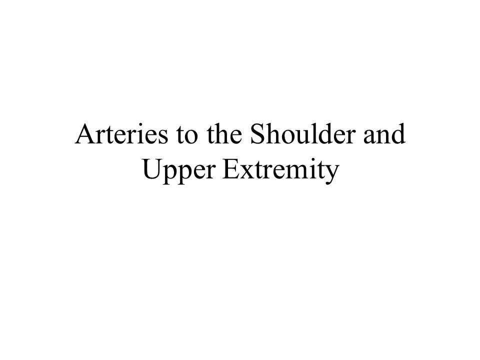 Arteries to the Shoulder and Upper Extremity