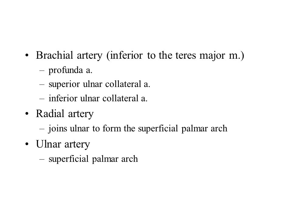 Brachial artery (inferior to the teres major m.) –profunda a.