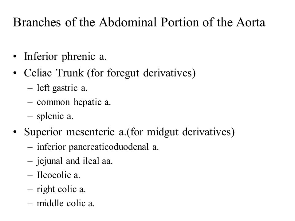 Branches of the Abdominal Portion of the Aorta Inferior phrenic a.