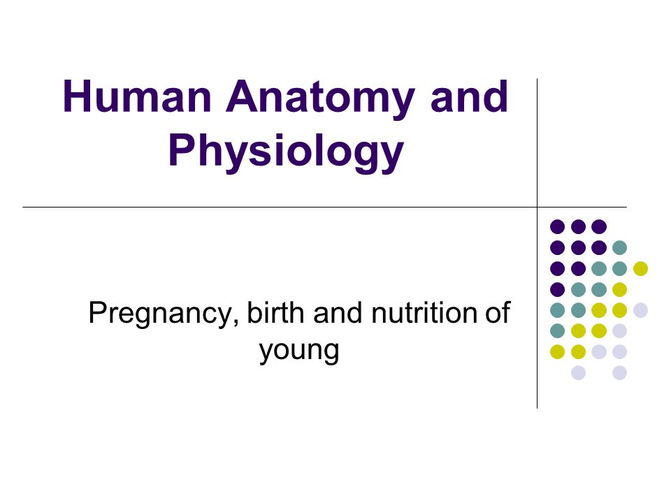 Human Anatomy and Physiology Pregnancy, birth and nutrition of young ...