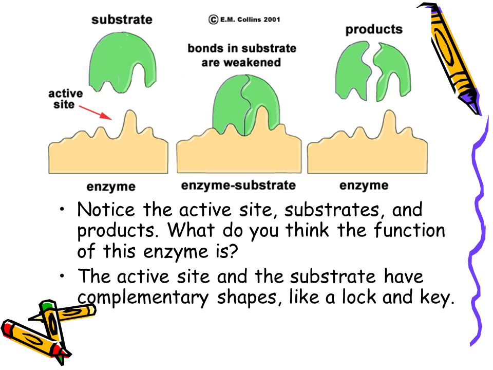 Notice the active site, substrates, and products. What do you think the function of this enzyme is.