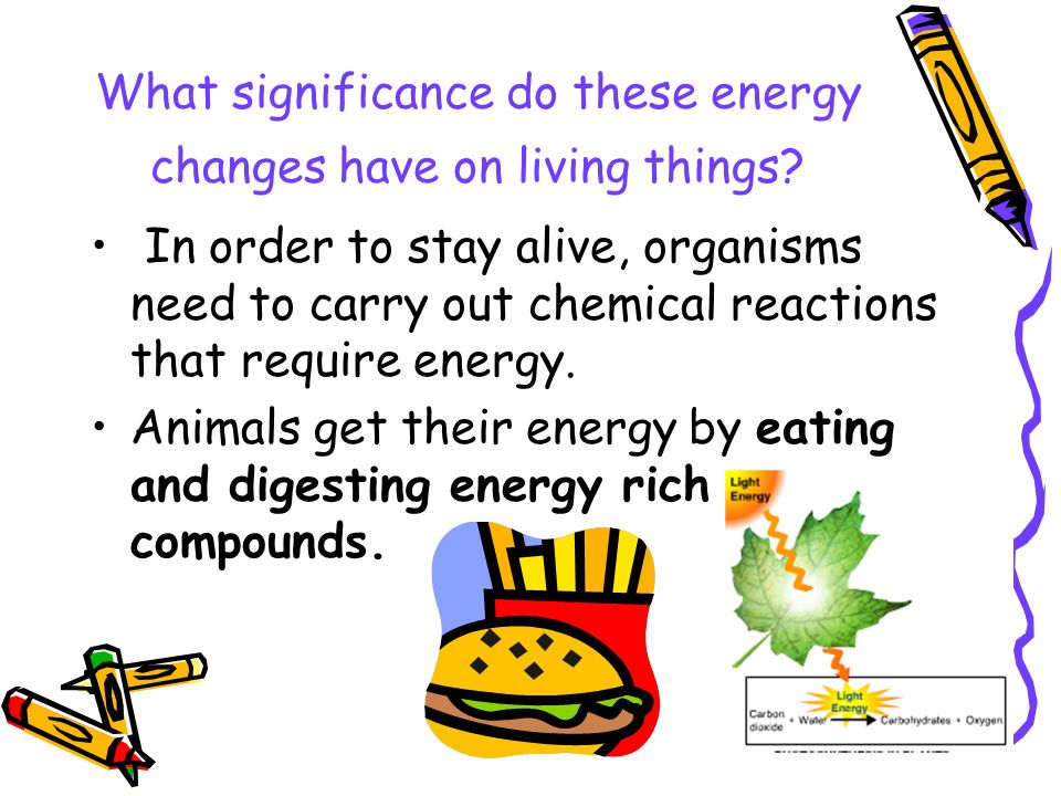 What significance do these energy changes have on living things.