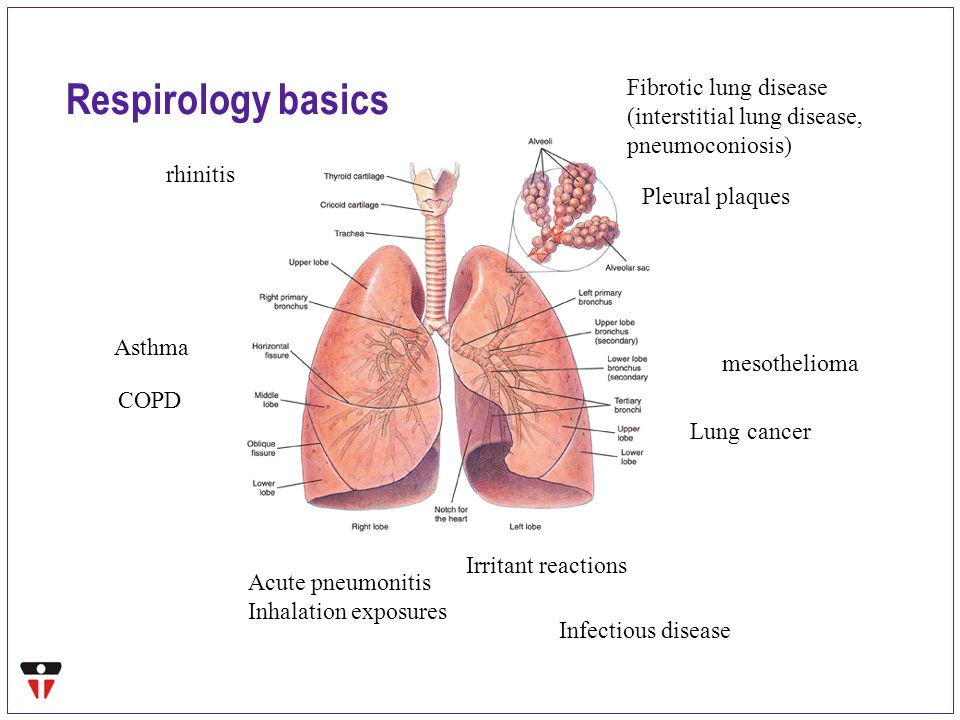 Asthma And Allergy Specialist Pa