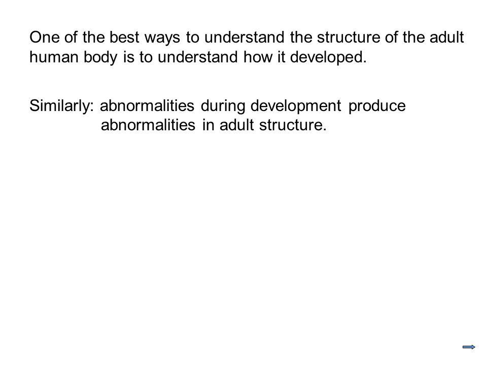 Biology 212 Anatomy Physiology Human Development Ppt Download