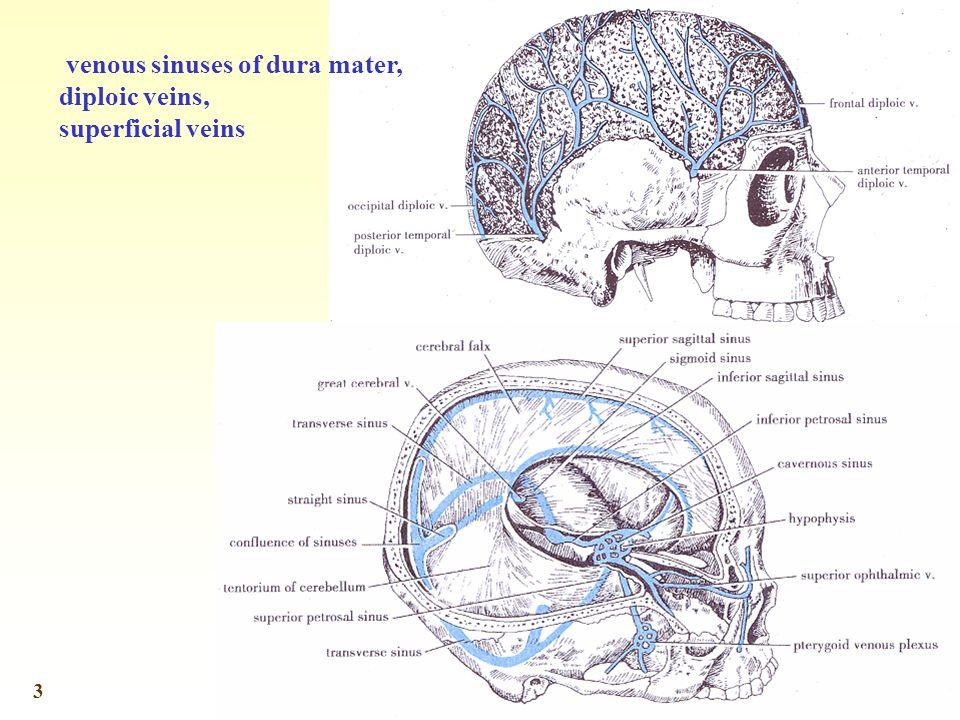 3 venous sinuses of dura mater, diploic veins, superficial veins