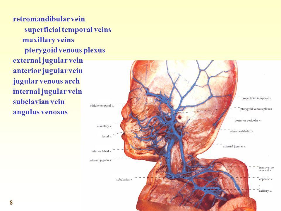 8 retromandibular vein superficial temporal veins maxillary veins pterygoid venous plexus external jugular vein anterior jugular vein jugular venous arch internal jugular vein subclavian vein angulus venosus