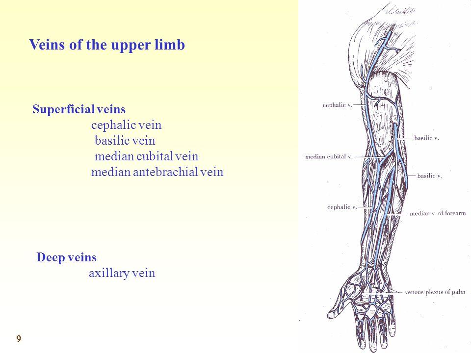 9 Veins of the upper limb Superficial veins cephalic vein basilic vein median cubital vein median antebrachial vein Deep veins axillary vein