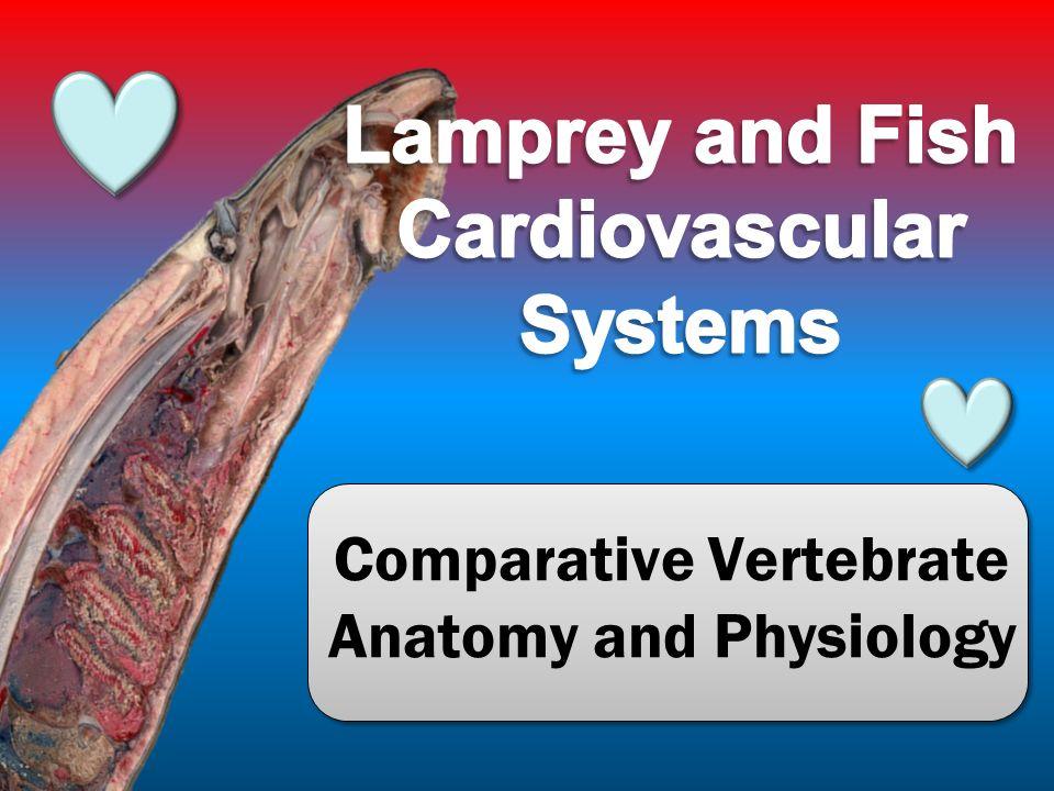 Vertebrate comparative anatomy 8506676 - follow4more.info