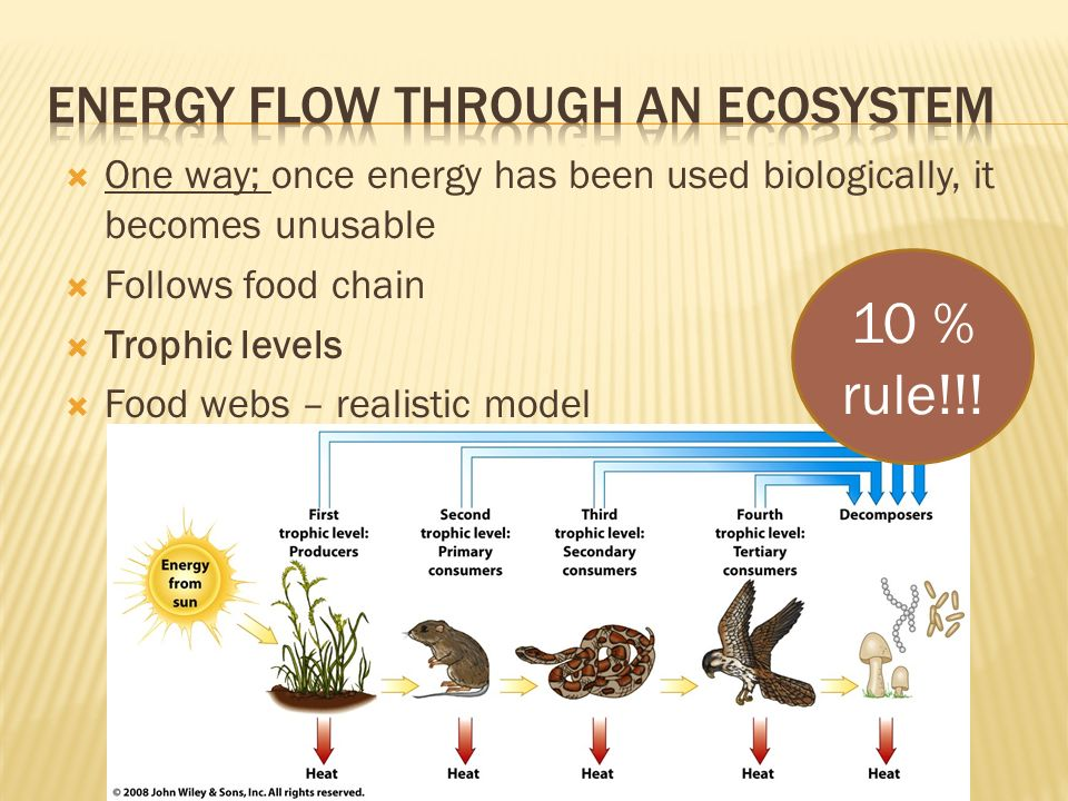  One way; once energy has been used biologically, it becomes unusable  Follows food chain  Trophic levels  Food webs – realistic model 10 % rule!!!