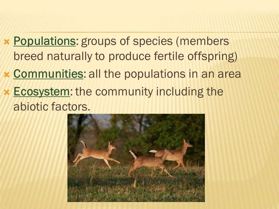  Populations: groups of species (members breed naturally to produce fertile offspring)  Communities: all the populations in an area  Ecosystem: the community including the abiotic factors.