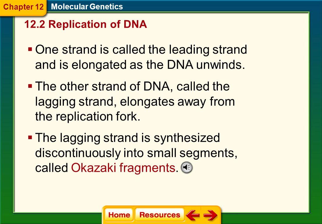 Printables Chapter 11 Dna And Genes Worksheet Answers chapter 11 dna and genes worksheet answers davezan