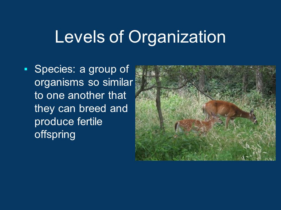Levels of Organization ▪Species: a group of organisms so similar to one another that they can breed and produce fertile offspring