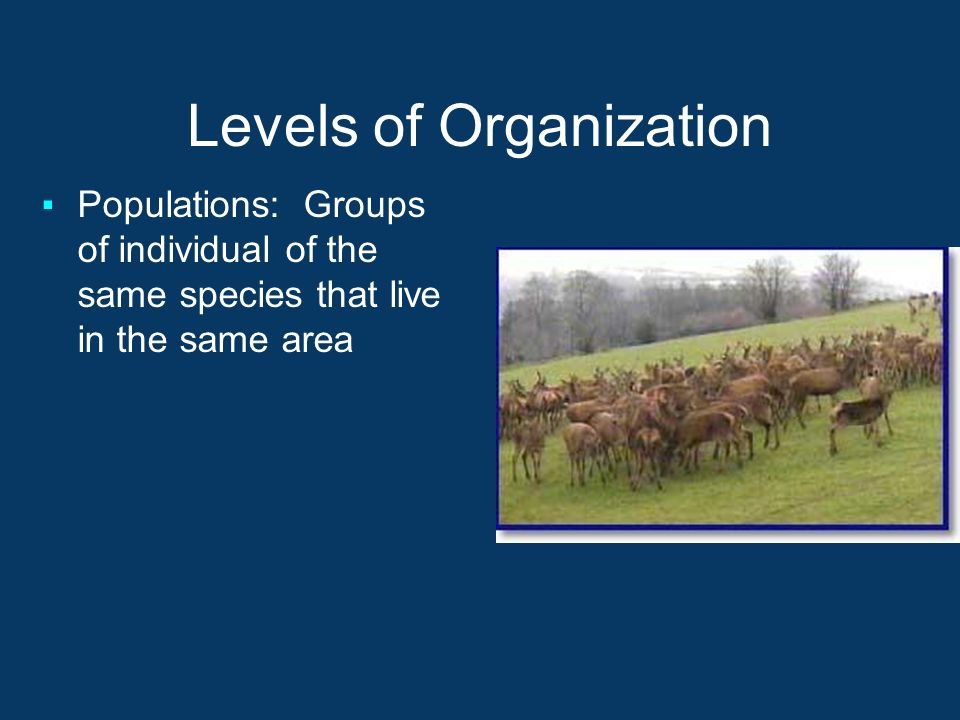 Levels of Organization ▪Populations: Groups of individual of the same species that live in the same area