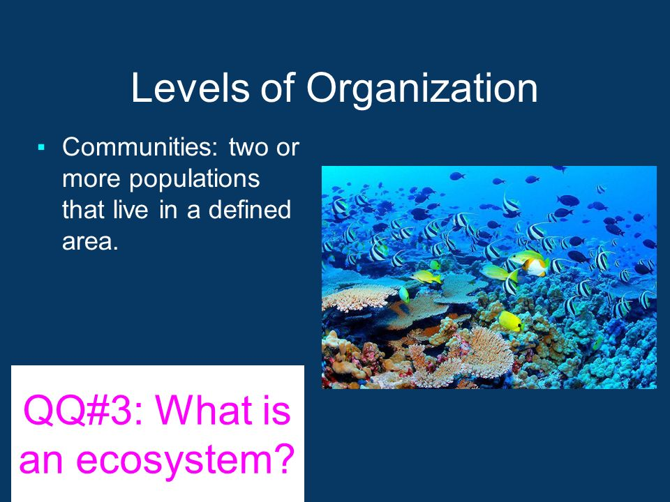 Levels of Organization ▪Communities: two or more populations that live in a defined area.