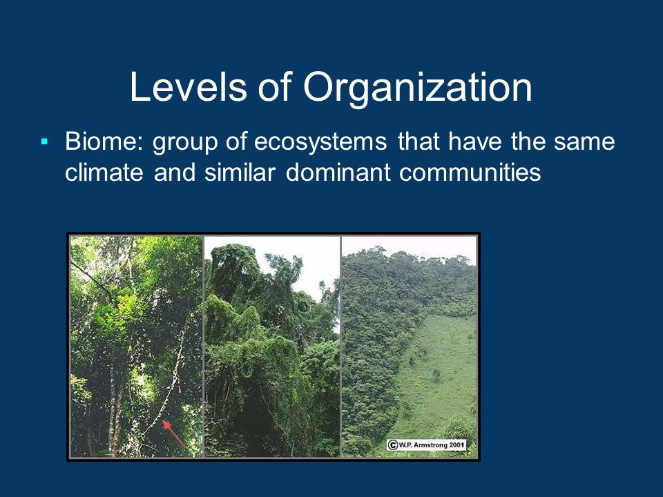 Levels of Organization ▪Biome: group of ecosystems that have the same climate and similar dominant communities