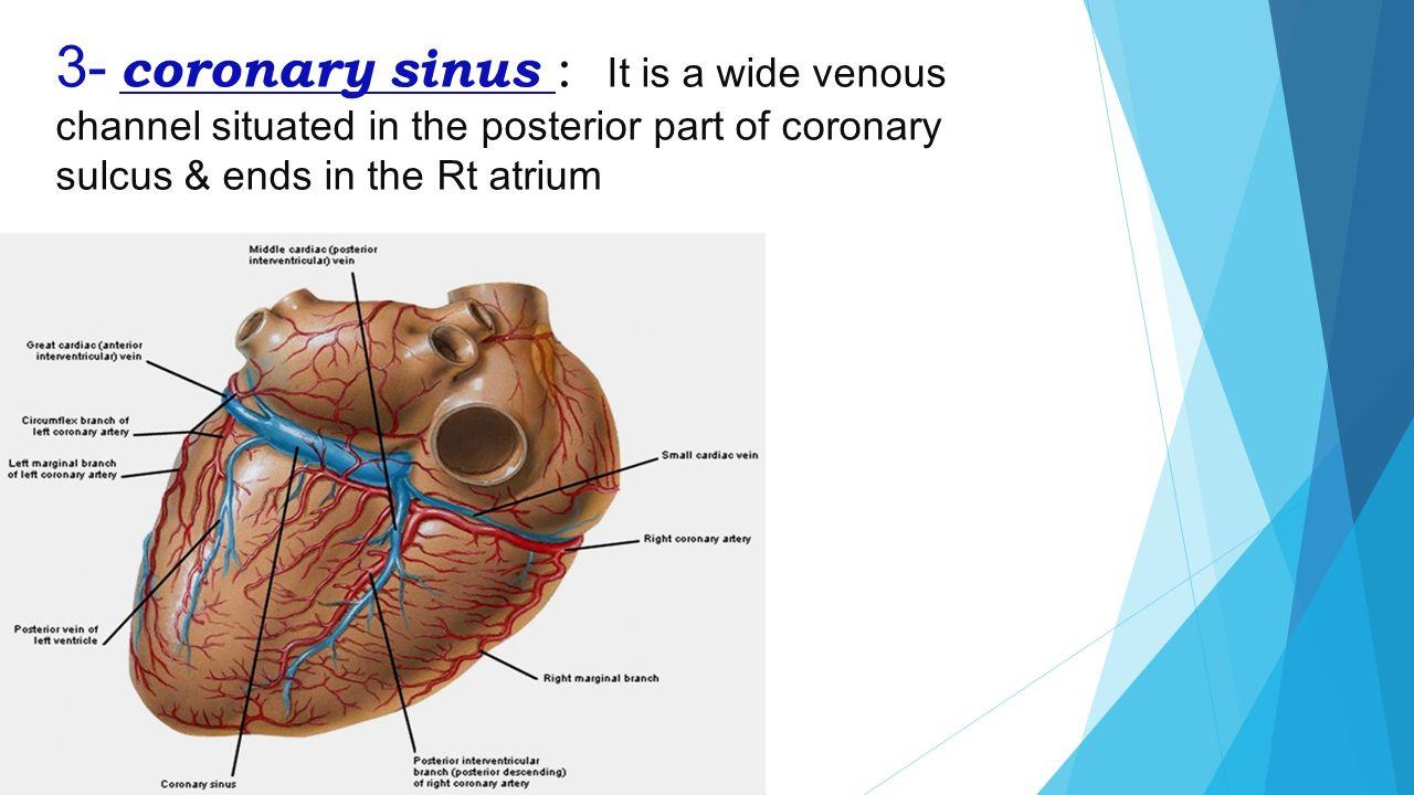 Coronary artery anatomy pictures