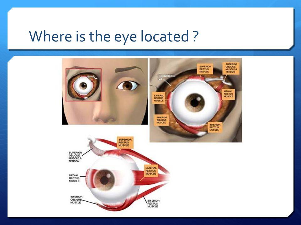 Großartig Anatomy And Physiology Of Eye Ppt Fotos - Menschliche ...