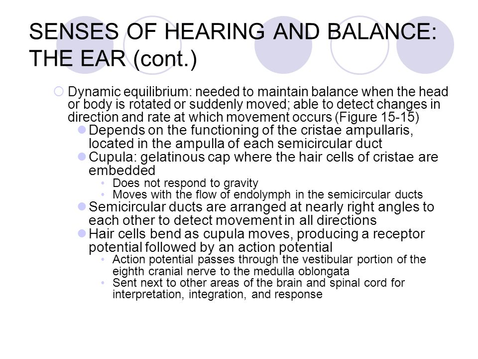 Chapter 15 Sense Organs ppt video online download – The Ear Hearing and Balance Worksheet