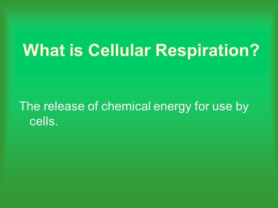 What is Cellular Respiration The release of chemical energy for use by cells.