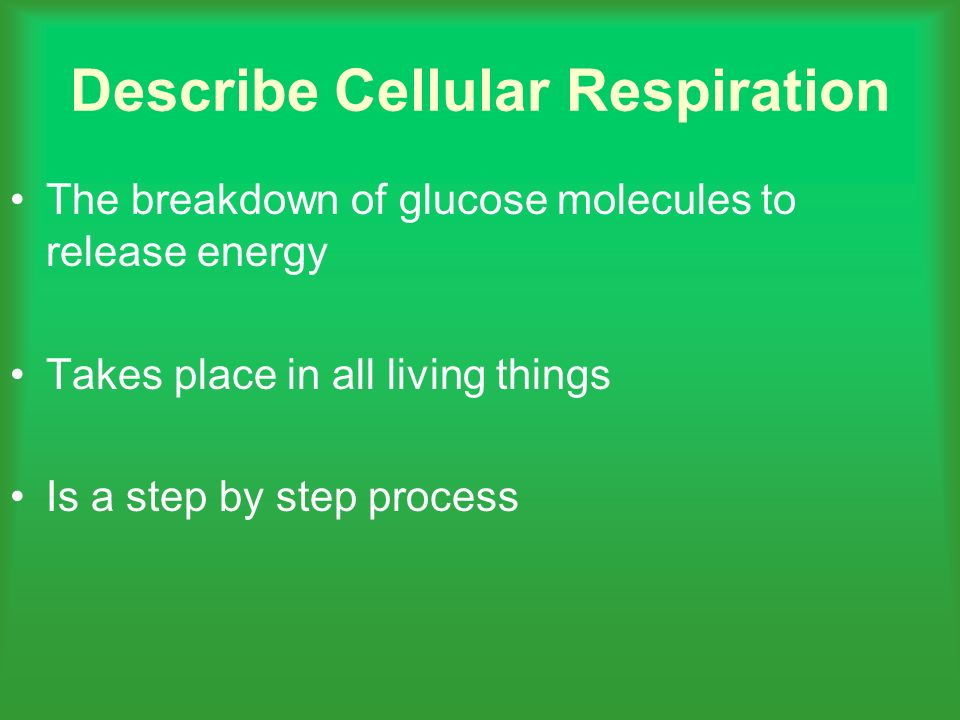 Describe Cellular Respiration The breakdown of glucose molecules to release energy Takes place in all living things Is a step by step process