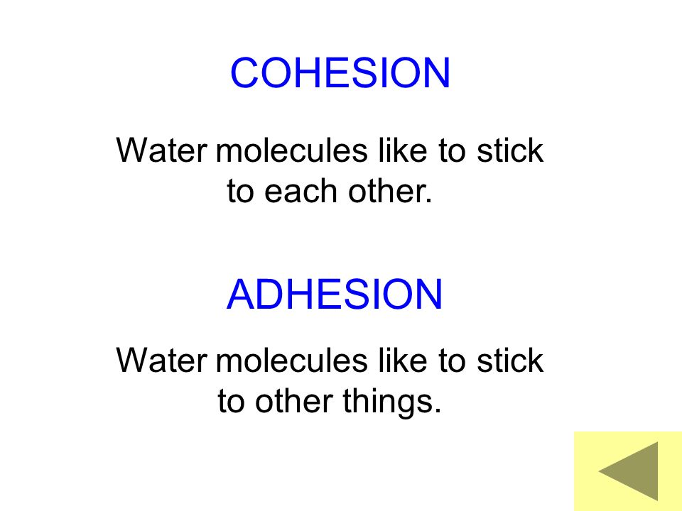 COHESION Water molecules like to stick to each other.