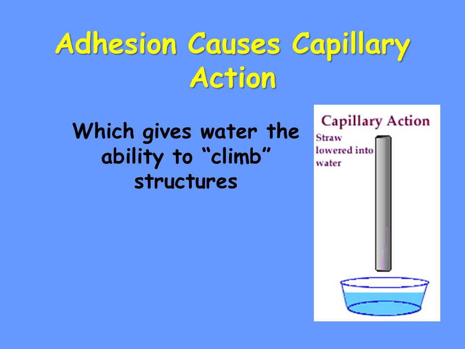 Adhesion Causes Capillary Action Which gives water the ability to climb structures