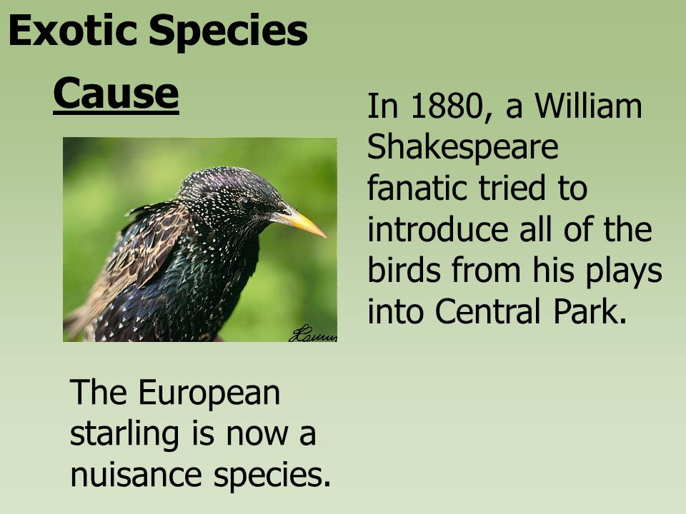 Exotic Species Cause In 1880, A William Shakespeare Fanatic Tried To  Introduce All Of The