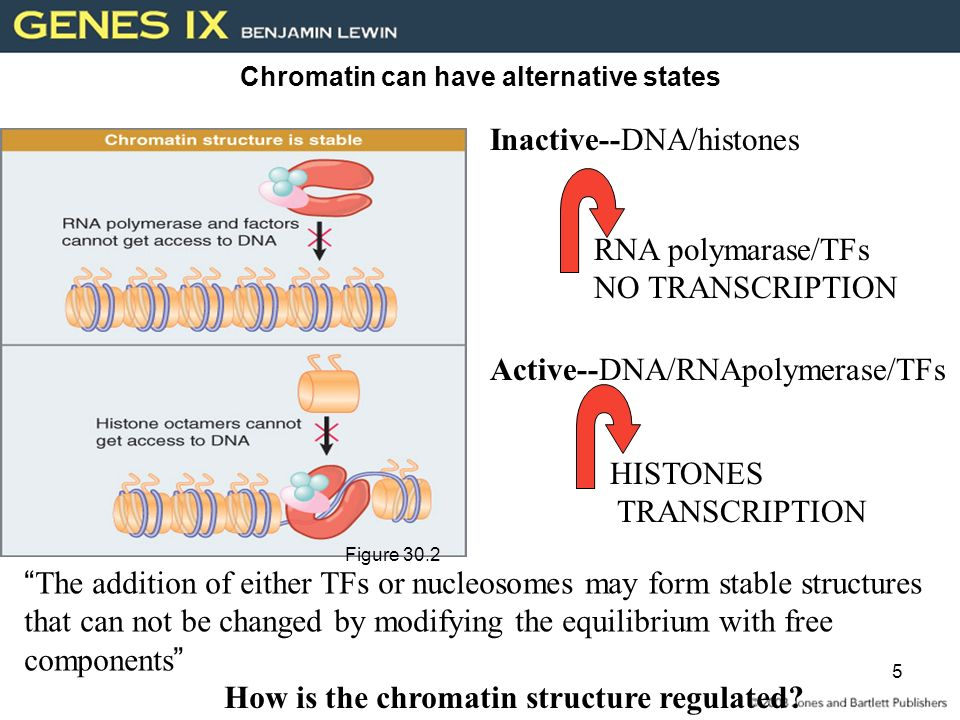 Controlling Chromatin Structure - ppt video online download