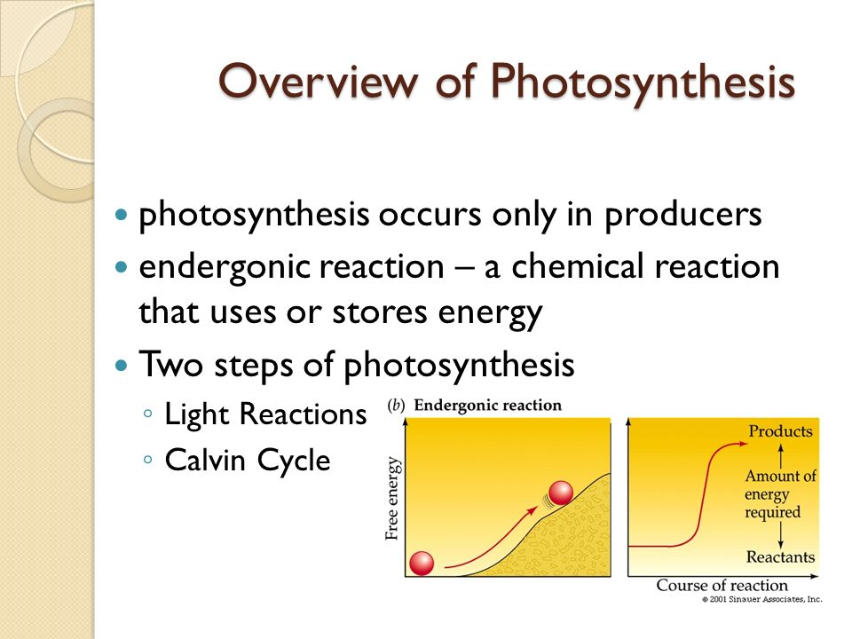 reactants of photsynthesis reaction