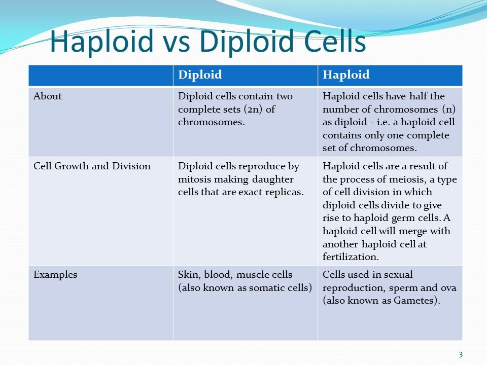 haploid vs diploid venn diagram