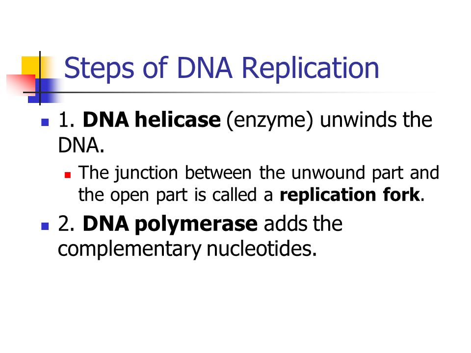 steps and process of dna Pcr or polymerase chain reaction was discovered by kary mullis in 1985 and is a way to copy a dna molecule this process is an enzyme type reaction which revolves around the conditions of the enzyme.