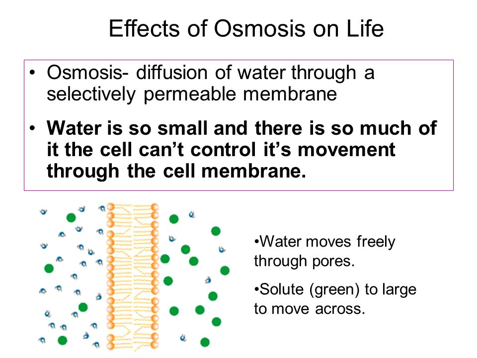 ph affects osmosis Factors affecting reverse osmosis membrane performance factors affecting ro membrane performance reverse osmosis permeate recovery, and system ph.