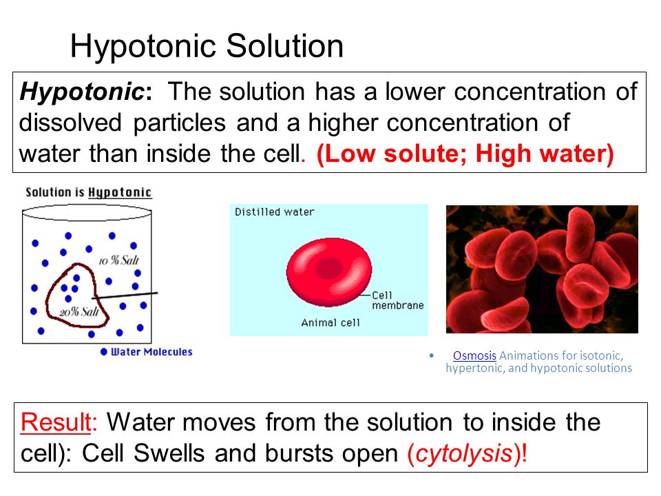 Hypotonic Solution Hypotonic: The solution has a lower concentration of dissolved particles and a higher concentration of water than inside the cell.