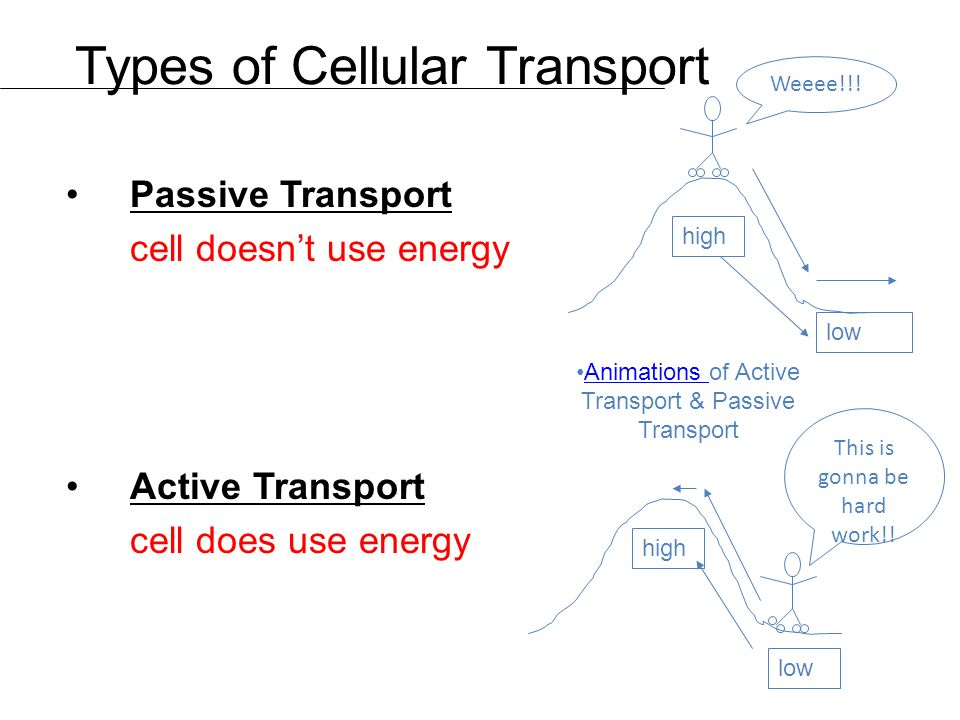 Types of Cellular Transport Passive Transport cell doesn't use energy Active Transport cell does use energy high low This is gonna be hard work!.