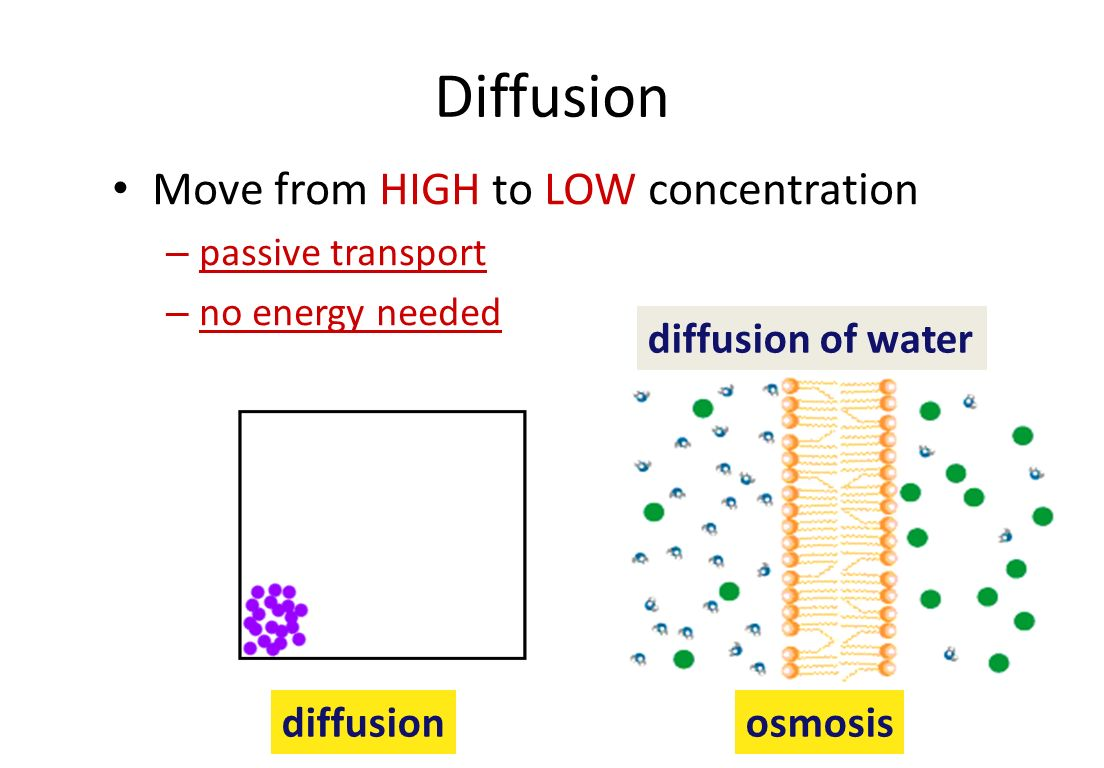 Molecules move from high to low Diffusion – move from HIGH to LOW concentration