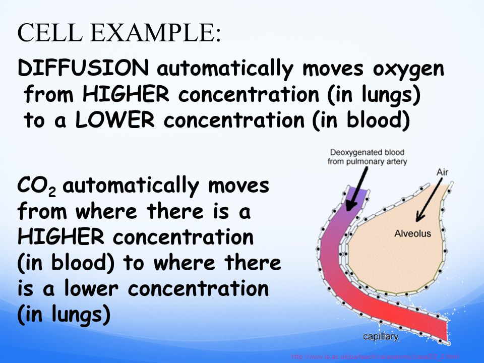 DIFFUSION automatically moves oxygen from HIGHER concentration (in lungs) to a LOWER concentration (in blood)   CELL EXAMPLE: CO 2 automatically moves from where there is a HIGHER concentration (in blood) to where there is a lower concentration (in lungs)