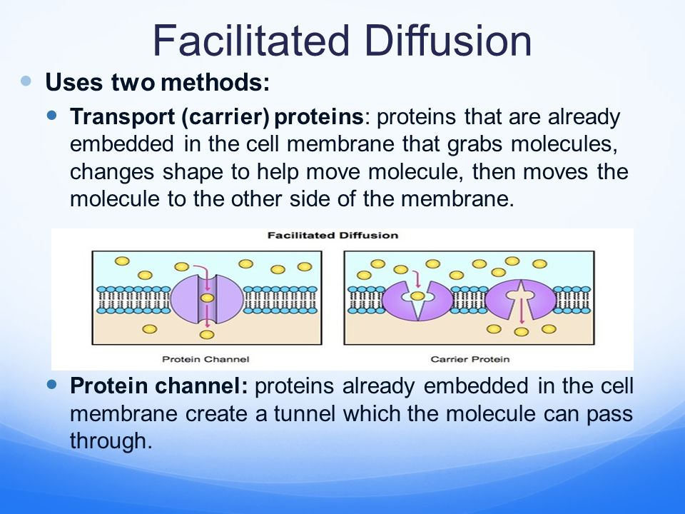 Facilitated Diffusion Uses two methods: Transport (carrier) proteins: proteins that are already embedded in the cell membrane that grabs molecules, changes shape to help move molecule, then moves the molecule to the other side of the membrane.