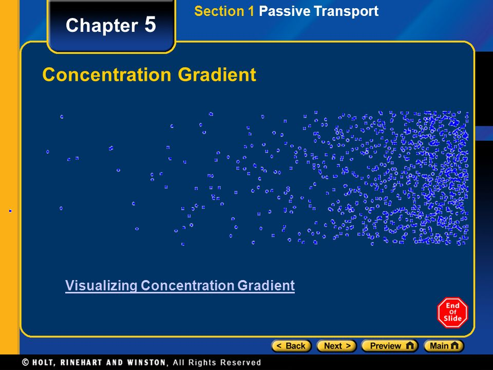 Chapter 5 Visualizing Concentration Gradient Concentration Gradient Section 1 Passive Transport