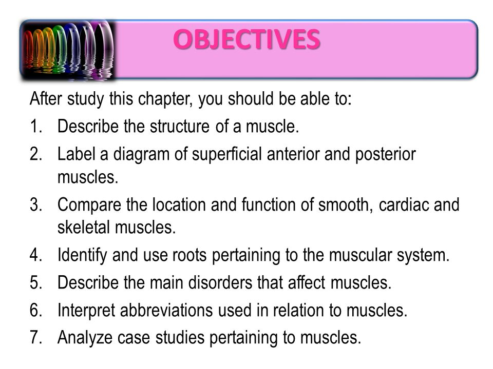 foundation year human muscular system. objectives after study this, Muscles