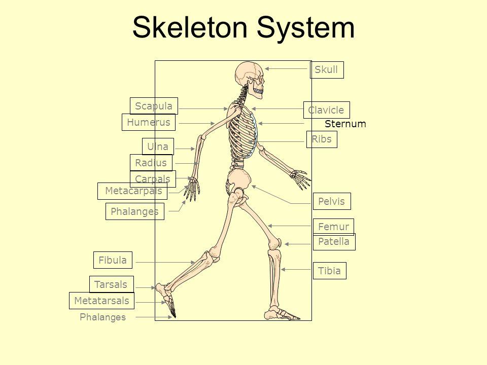 Unit C Human Body Systems Anatomy Physiology 1h0301 Anatomy