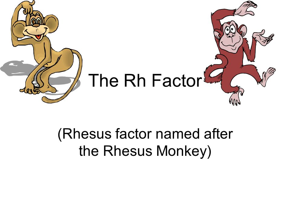 The Rh Factor (Rhesus factor named after the Rhesus Monkey)