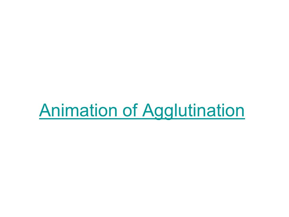 Animation of Agglutination