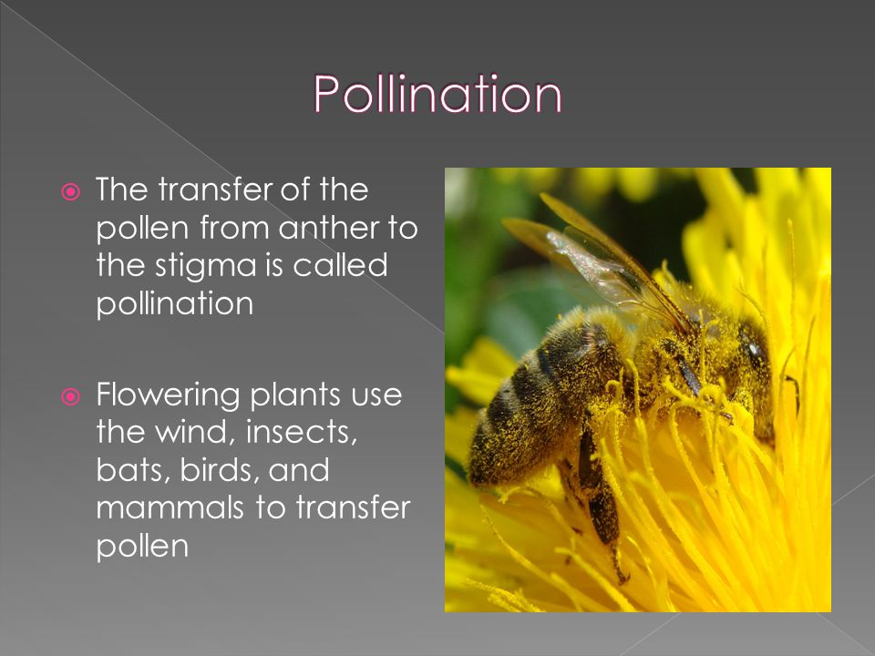  The transfer of the pollen from anther to the stigma is called pollination  Flowering plants use the wind, insects, bats, birds, and mammals to transfer pollen