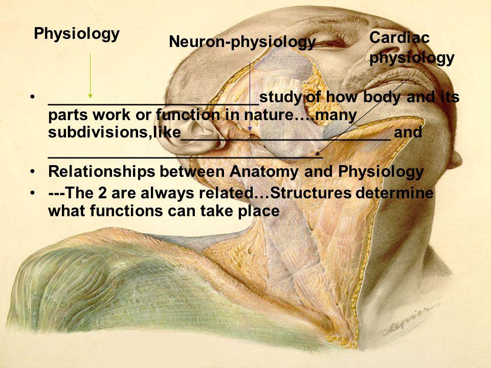 Groß The Study Of Anatomy And Physiology Zeitgenössisch - Anatomie ...