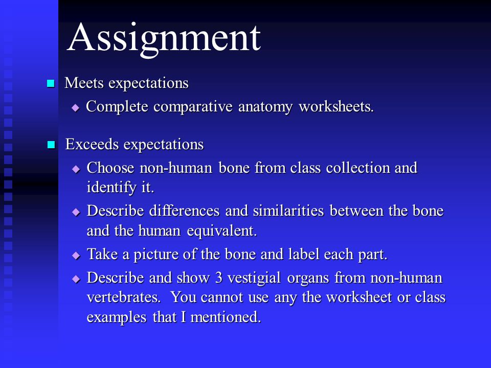 Evolution objectives Students should be able to 1 Describe what – Comparative Anatomy Worksheet