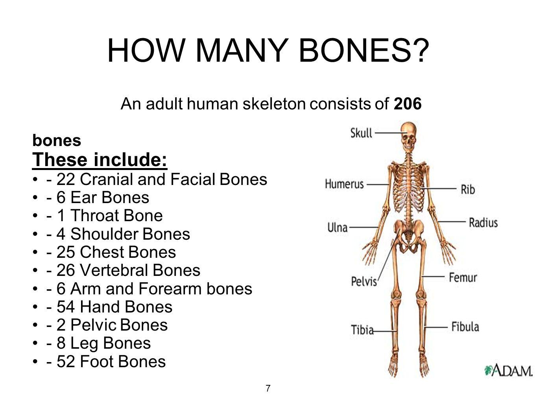 How many bones in hand 79