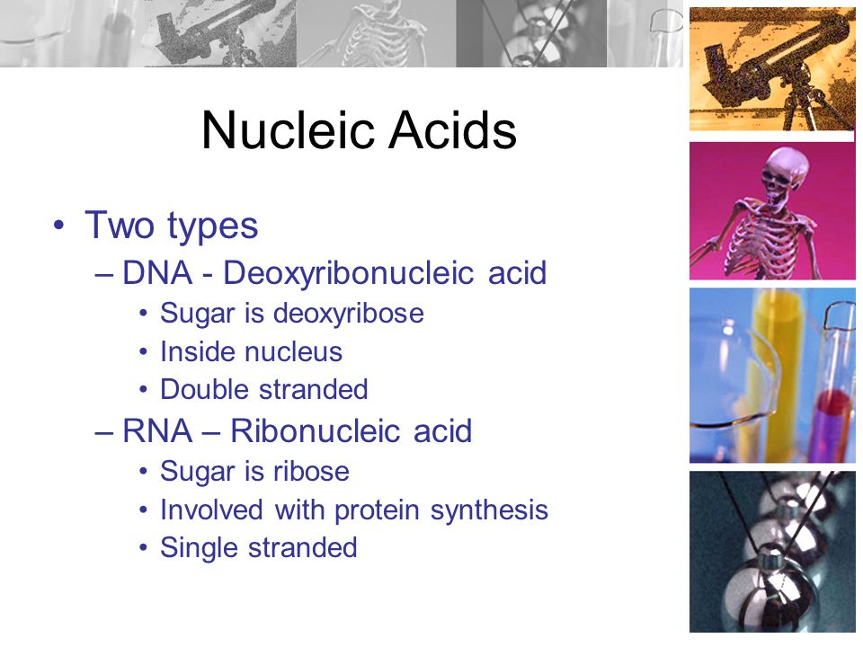 Nucleic Acids Building blocks: Nucleotides –5 C sugar –nitrogenous base –Phosphorus Contain C, H, O, N and P Store and transmit genetic info