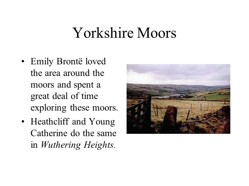 thesis on wuthering heights 18th and Here is the best resource for homework help with litr 211 : english literature 18th century to present at american public university find litr211 study.
