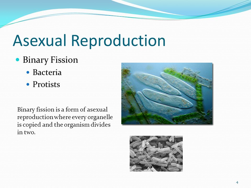 1. 2 Asexual Reproduction Sexual Reproduction Both Types of ...